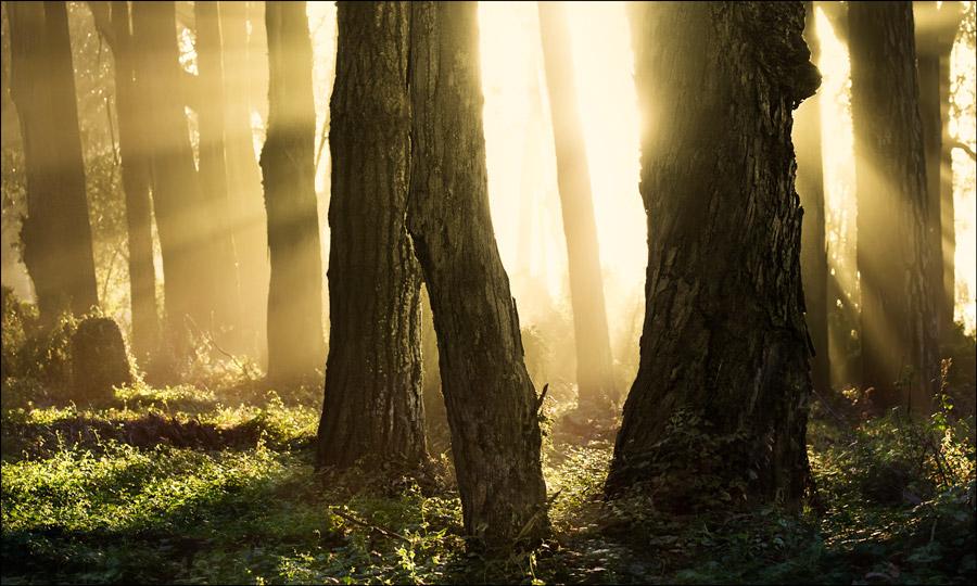 Mystical Interpretation of the Verse of Light